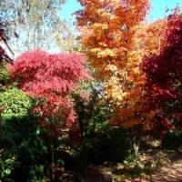 Gardens Autumn